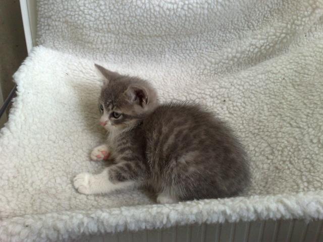 GUIZMO (Cassis, chaton mâle, né le 10 mai 2011, identifié 250269604305582) - Page 8 22062010