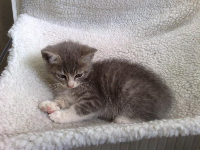 GUIZMO (Cassis, chaton mâle, né le 10 mai 2011, identifié 250269604305582) - Page 8 22062011