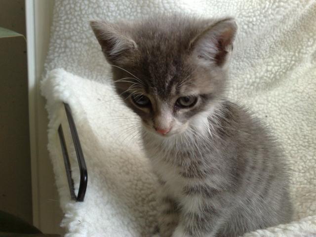 GUIZMO (Cassis, chaton mâle, né le 10 mai 2011, identifié 250269604305582) - Page 8 22062013