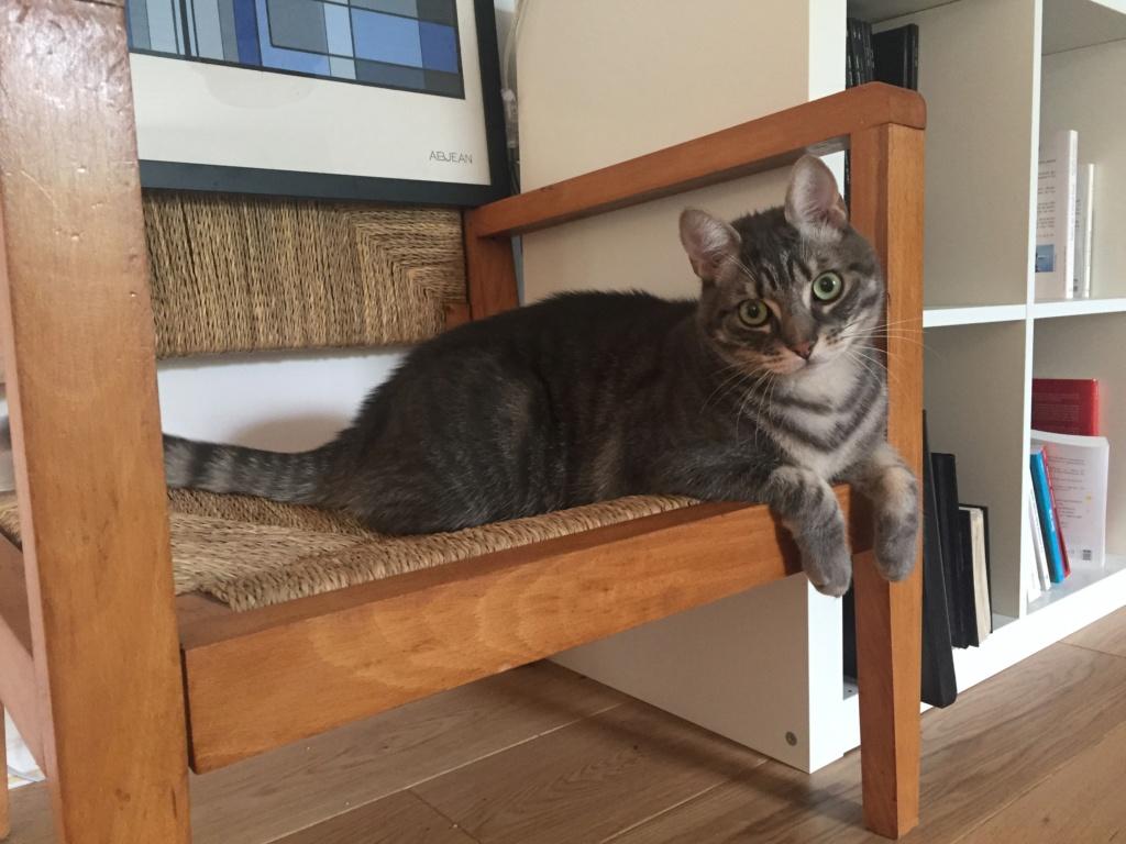 Félix, chat gris tigré, né le 30 juin 2017. 2d5ea810