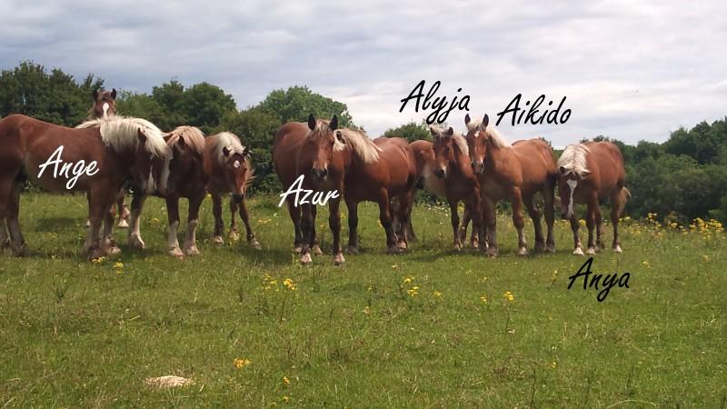 Dpt 70, Avalon, Artiste (Décédé 2015) et Aikido, ONC trait, sauvés par py (Août 2011) Dsc_0212