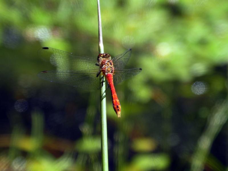 Insectopia Sany0011