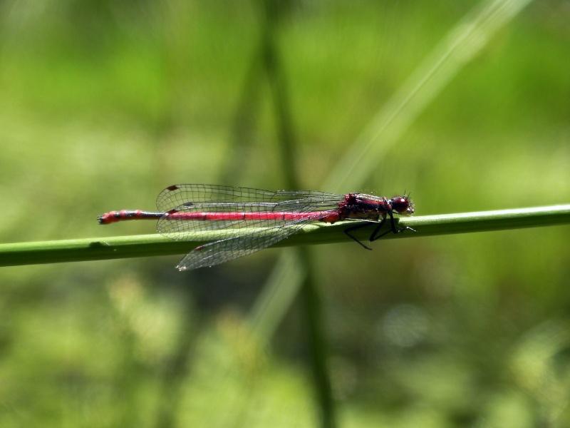 Insectopia Sany0013
