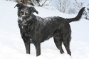 Ma chienne  Img_7410