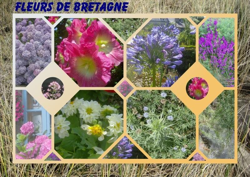 Fleurs ... tout simplement - Page 2 Fleurs10