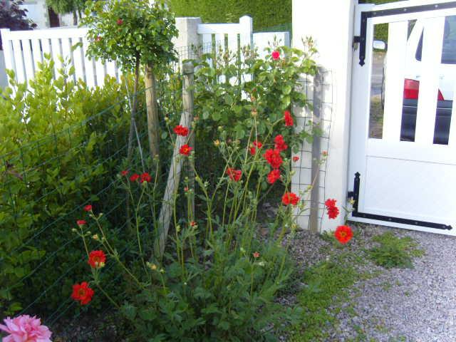 fleurs diverses de mon jardin Banc_t13