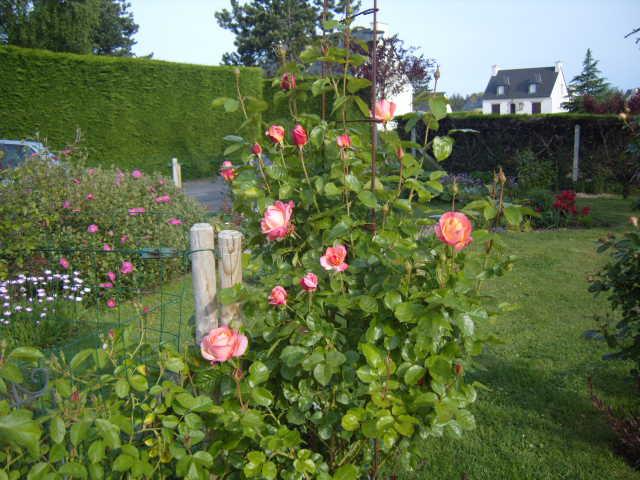 fleurs diverses de mon jardin Banc_t15