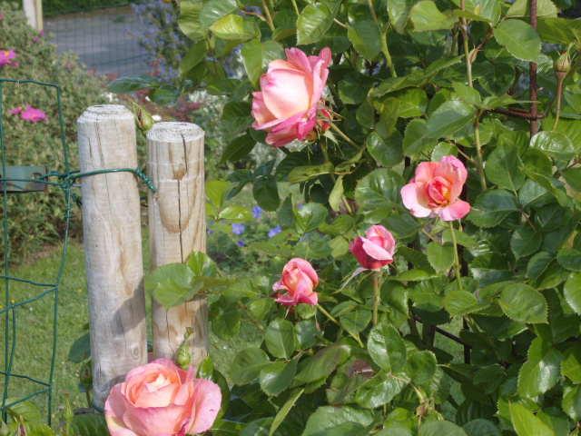 fleurs diverses de mon jardin Banc_t16