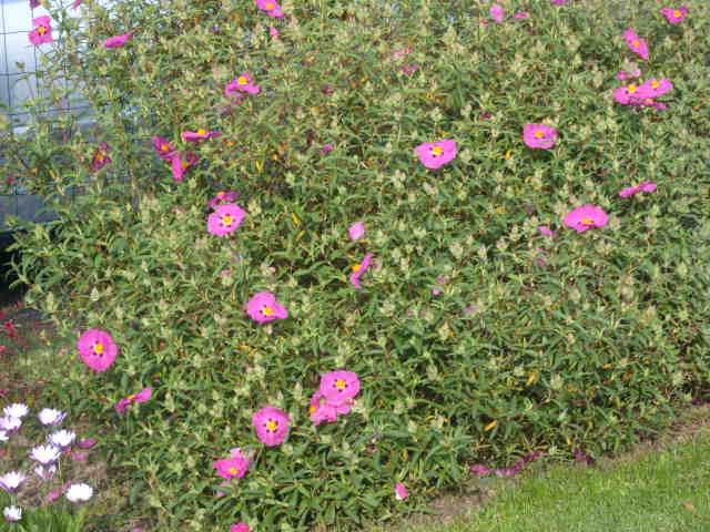 fleurs diverses de mon jardin Banc_t17