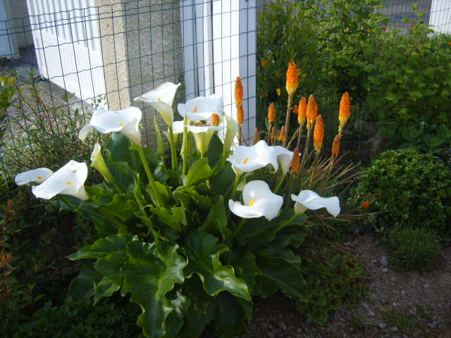 fleurs diverses de mon jardin Banc_t18