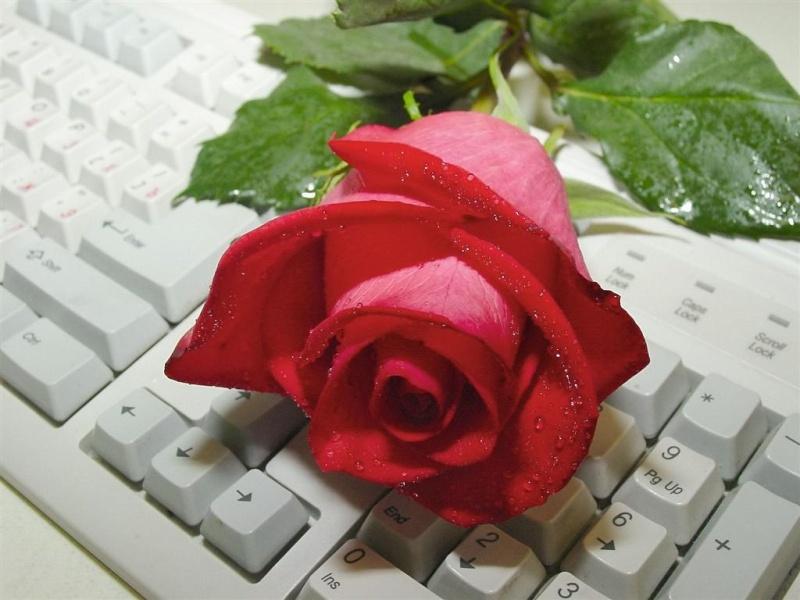 كلاس روانشناسي و مشاوره... - صفحة 4 Rose10