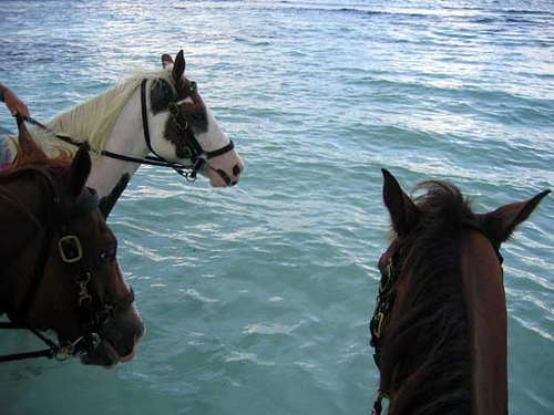 LIVE from QM2 Horseb10