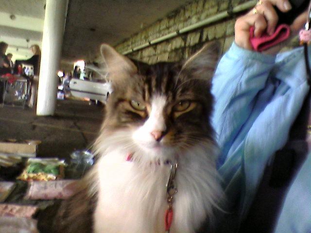 présentation de vos animaux: chats: Cle_al13