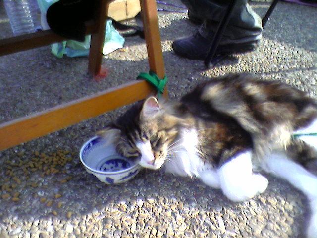 présentation de vos animaux: chats: Cle_vi11