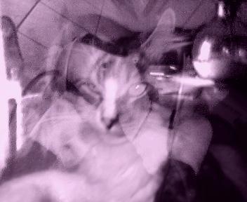 présentation de vos animaux: chats: Montag11