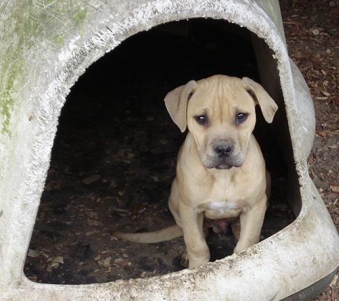 New Pup! Newpup14
