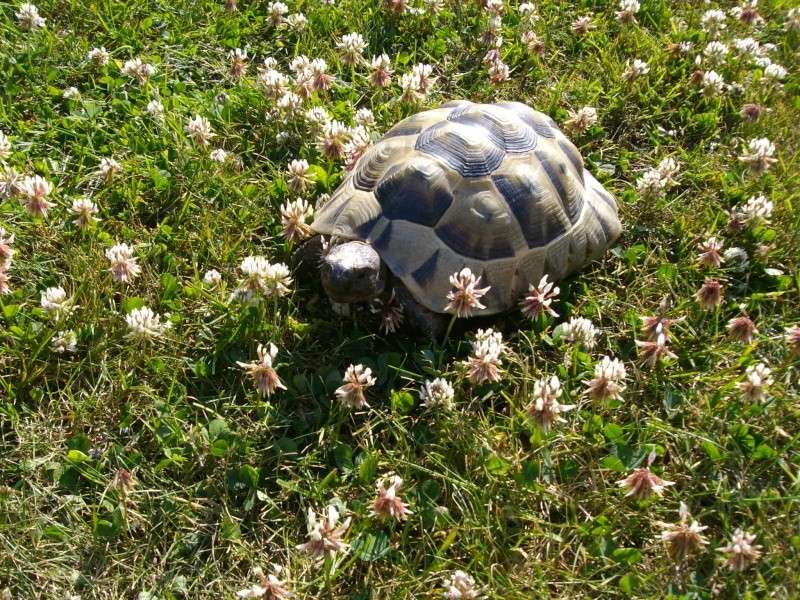 Ma tortue (pour le plaisir des critiques de Génia !!) Imgp0094