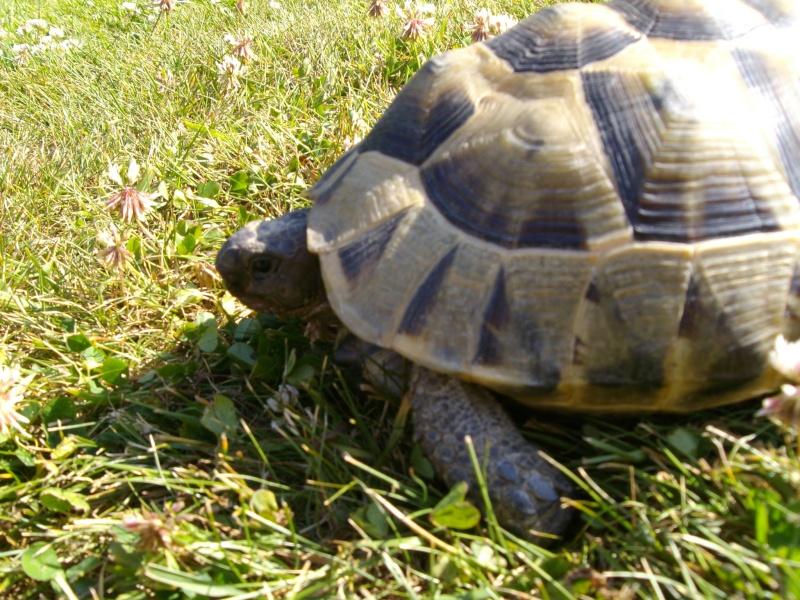 Ma tortue (pour le plaisir des critiques de Génia !!) Imgp0095