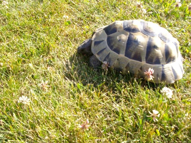 Ma tortue (pour le plaisir des critiques de Génia !!) Imgp0096
