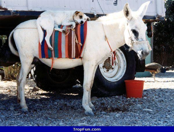 photos insolites d'animaux 6114210