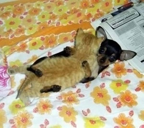 chien et chat Humour13