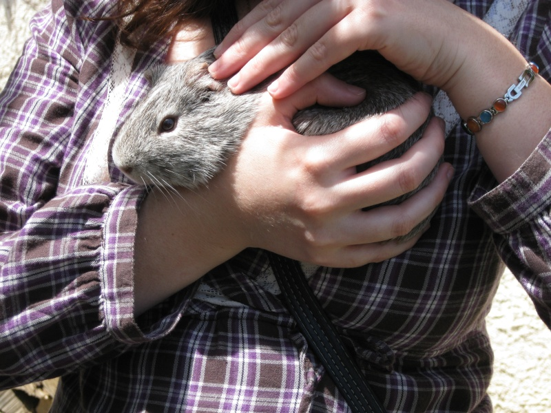 Huxley male chon . ( Adopte ) Luna_m10