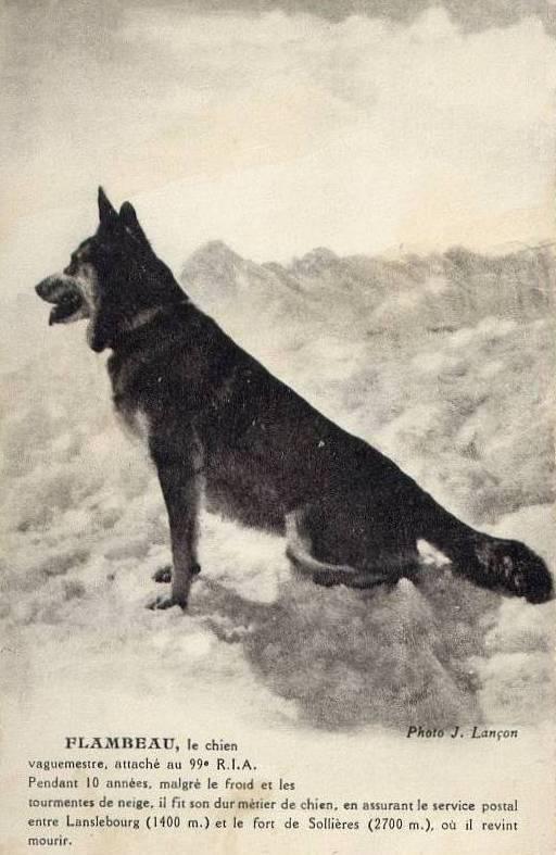 Flambeau, le chien vaguemestre Flambe10