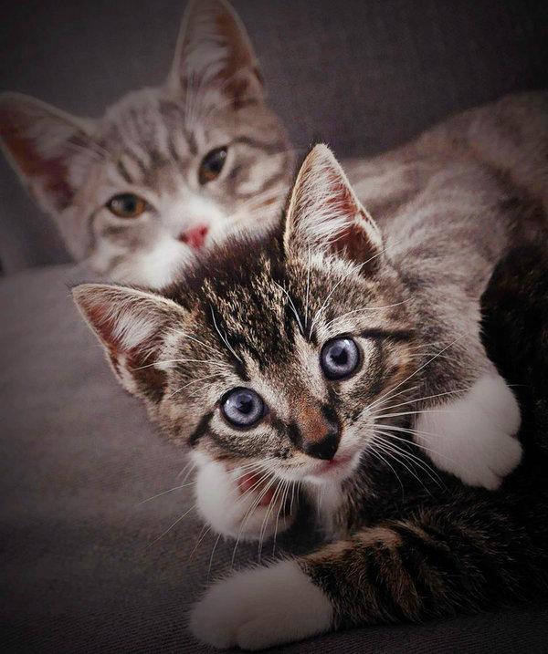 CUTE LOL KITTIES!!! Are_yo10