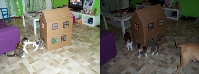 Casa-gioco per il gatto :) Casaga11