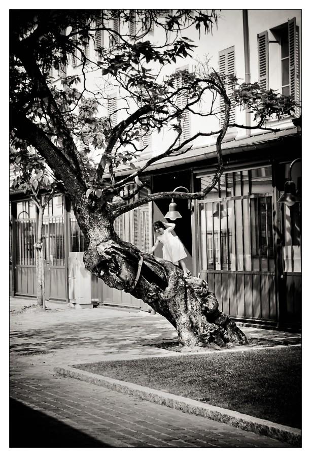 Sur l'arbre 978_im10