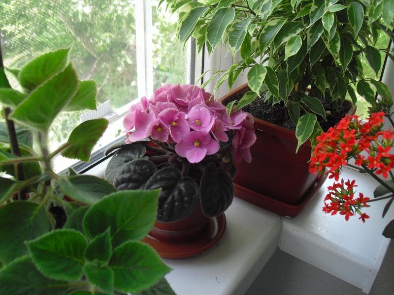 florile din apartament/gradina - Pagina 8 Cimg2412