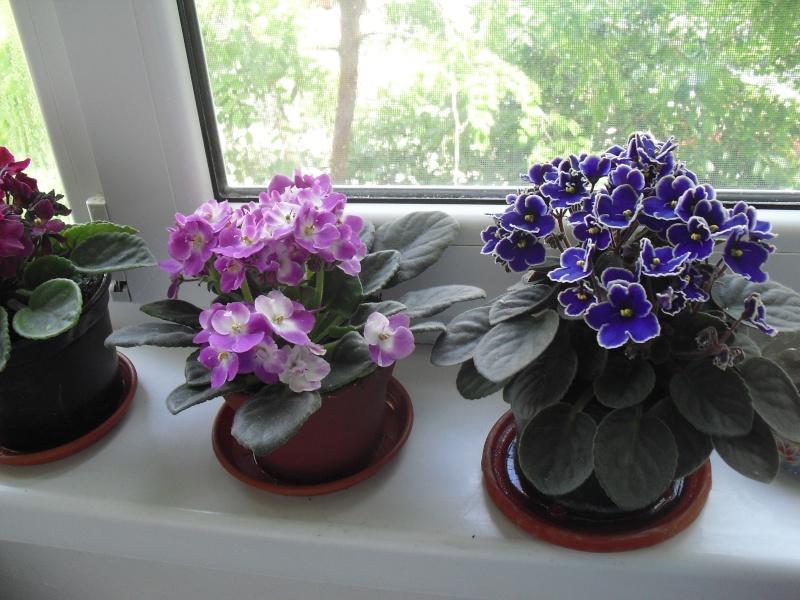 florile din apartament/gradina - Pagina 8 Cimg2413