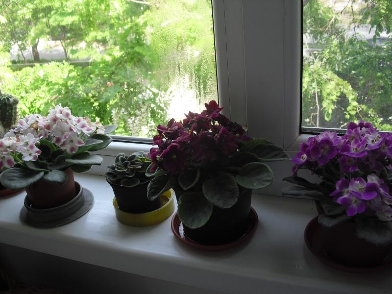 florile din apartament/gradina - Pagina 8 Cimg2414