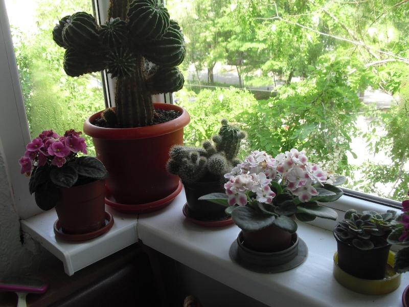 florile din apartament/gradina - Pagina 8 Cimg2415