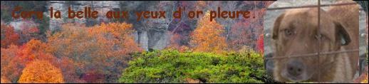 MISSION PARRAINAGE CROQUETTES POUR LES 220 CHIENS DU REFUGE DE LENUTA - Page 3 Bannie10