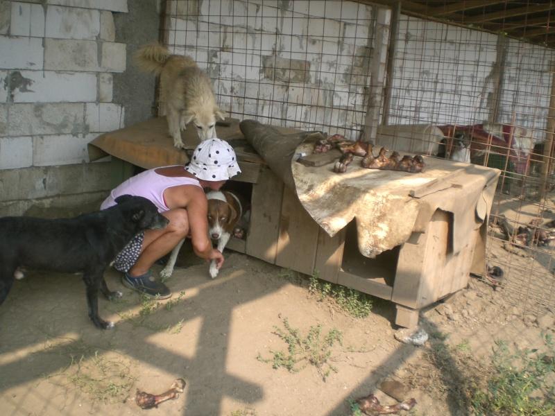 boxe* - FACTURES CONCERNANT LA CONSTRUCTION DE LA PREMIERE TRANCHE DES BOXES POUR LE REFUGE DE LENUTA Berta10