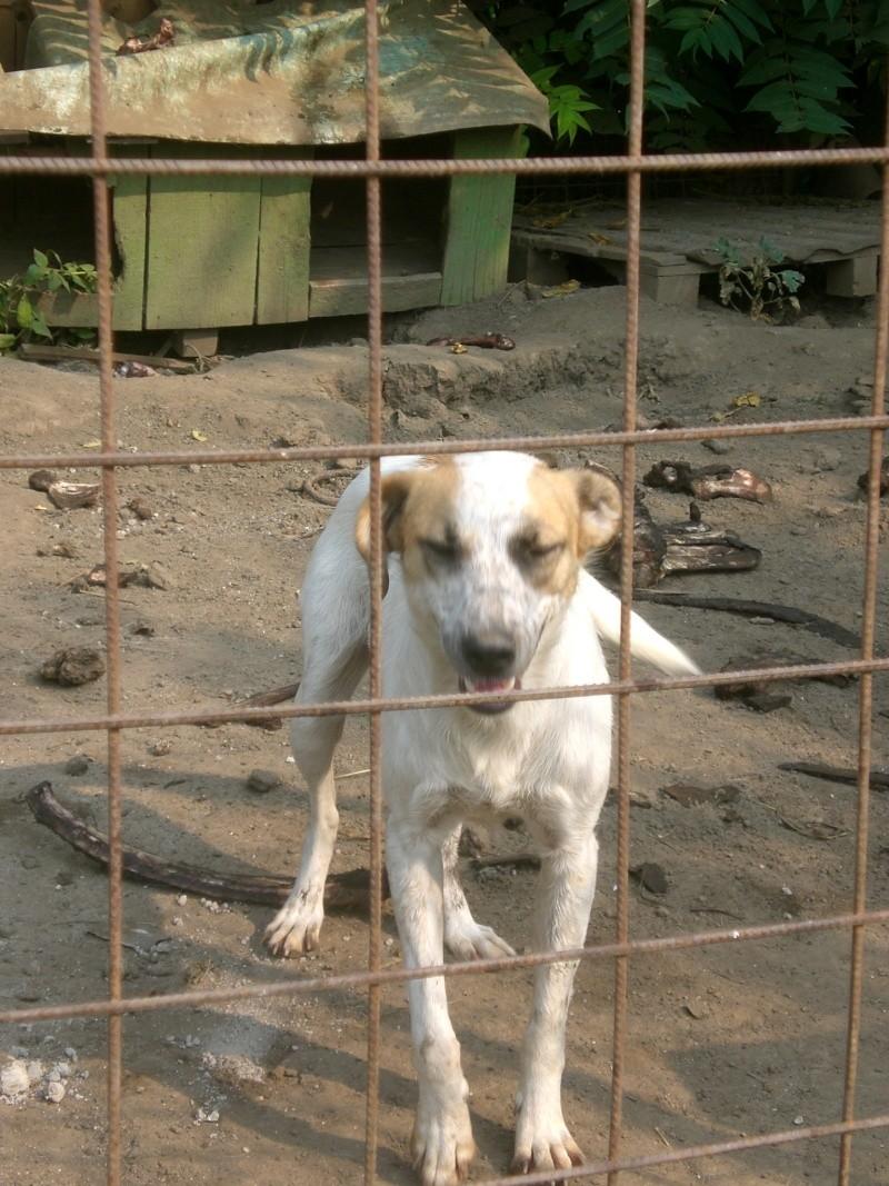 fata - FATA, née le 12/06/2009, arrivée chiot au refuge (soeur de Mickey et fille de Tara) - en FA dans le 49 - GARANT - SOS -R-FB-SC-30MA Cimg1013