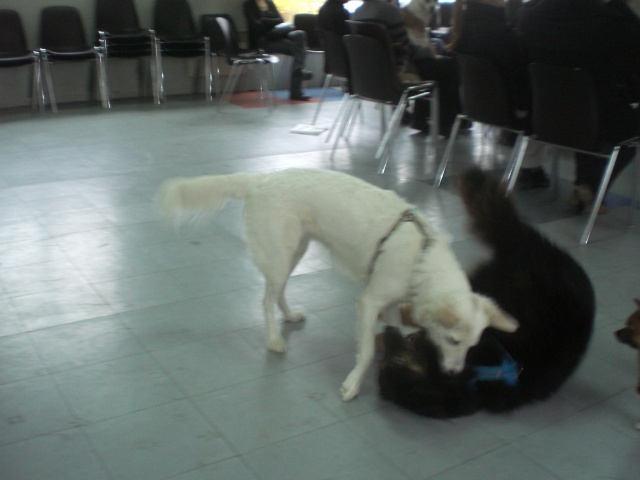 FORMATION CANINE DISPENSEE PAR CORINNE MARTIN - Page 2 Cimg3718