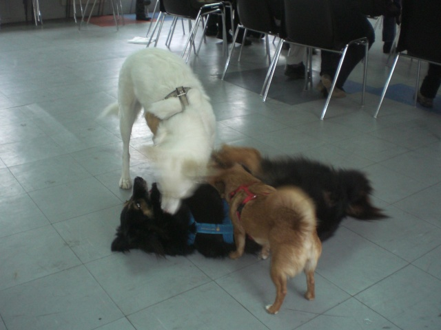 FORMATION CANINE DISPENSEE PAR CORINNE MARTIN - Page 2 Cimg3719