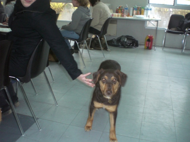 FORMATION CANINE DISPENSEE PAR CORINNE MARTIN - Page 2 Cimg3721