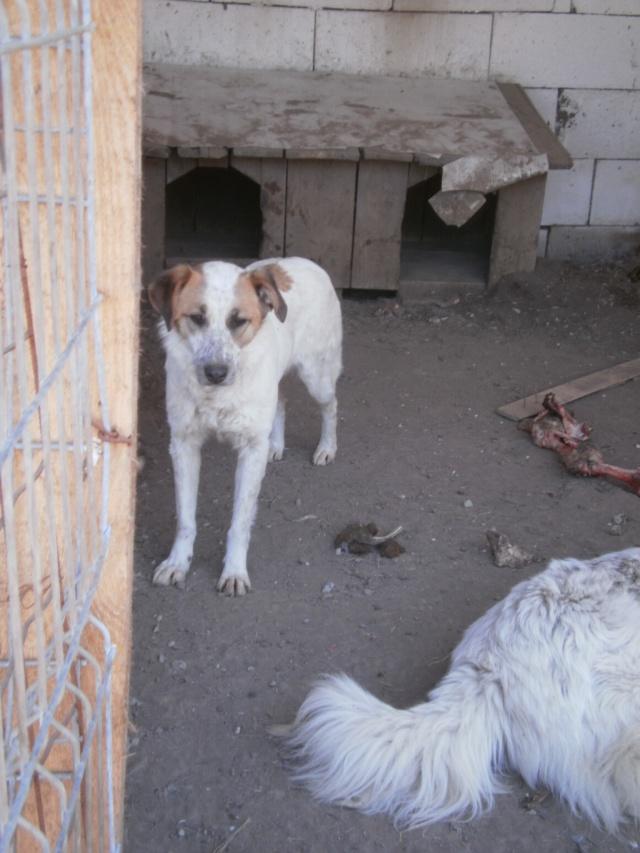 fata - FATA, née le 12/06/2009, arrivée chiot au refuge (soeur de Mickey et fille de Tara) - en FA dans le 49 - GARANT - SOS -R-FB-SC-30MA Fatap414