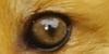 A qui appartient cet oeil ? - Page 2 Img10