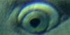 A qui appartient cet oeil ? - Page 2 Img210