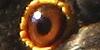 A qui appartient cet oeil ? - Page 2 Img310