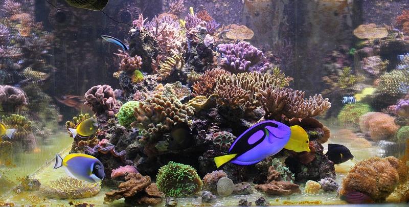 recherche boutures de coraux Img_2911