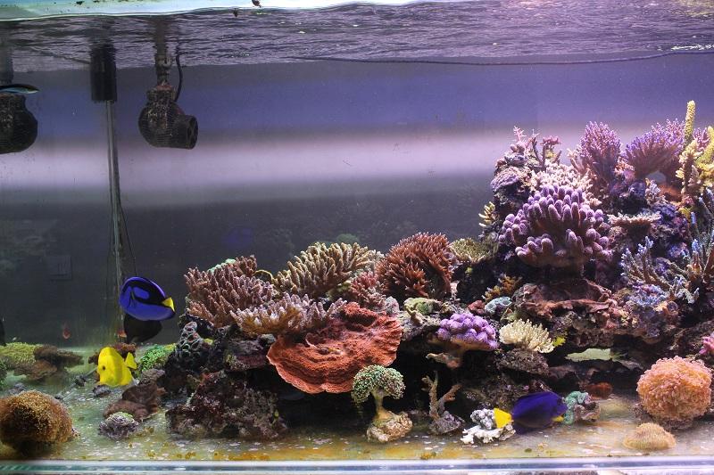 recherche boutures de coraux Img_2912
