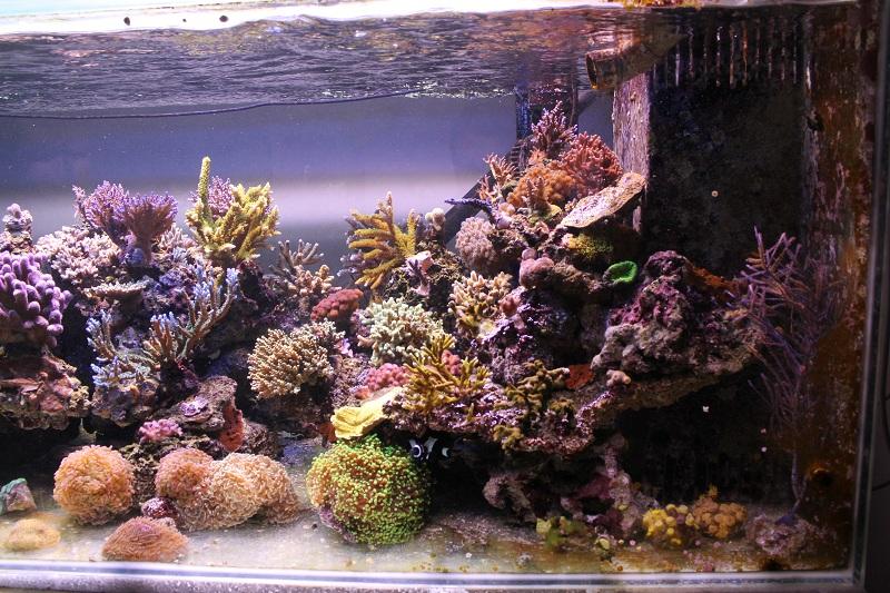 recherche boutures de coraux Img_2913
