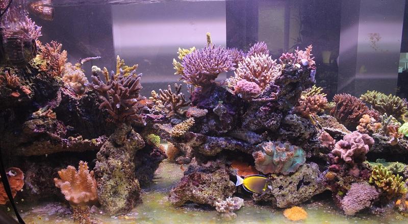 recherche boutures de coraux Img_2915