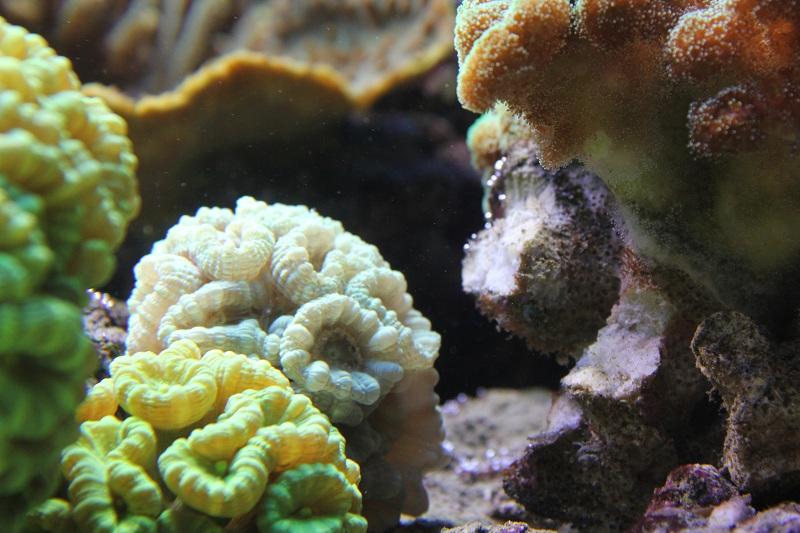 recherche boutures de coraux Img_2929