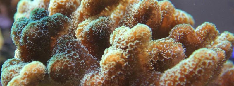 recherche boutures de coraux Img_2930